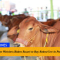 5 Best Online Websites (Bakra Bazar) to Buy Bakra/Cow in Pakistan For Eid-Ul-Azha